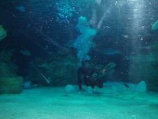 050703_aquarium_5