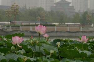 050720_lianhua_9