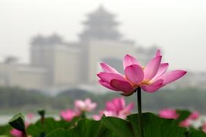 060719_lianhuachi40