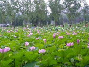 060719_lianhuachi7