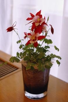 070419_flower35_0361