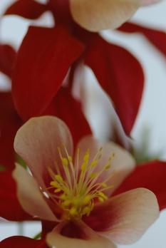 070419_flower35_0481